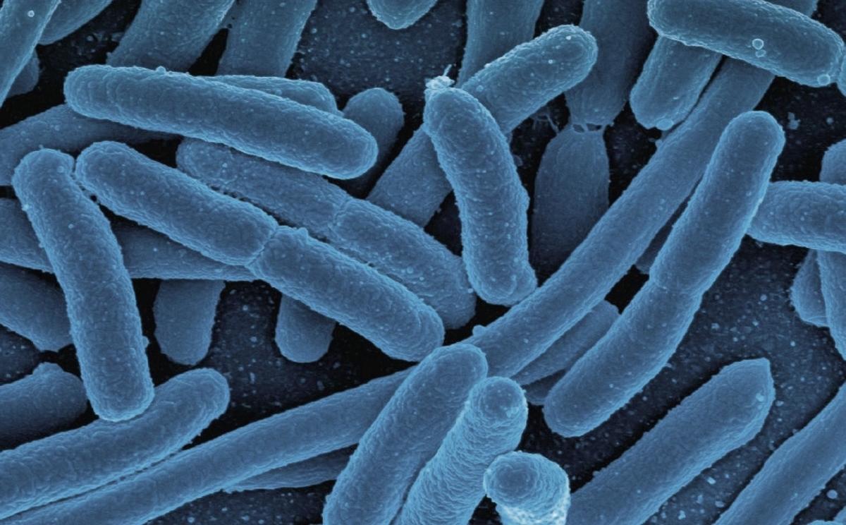 bakterien-gluecklich