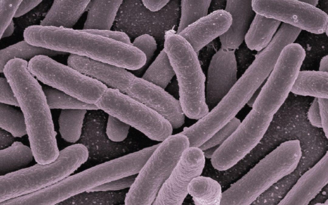 5 Dinge, die du für dein Mikrobiom tun kannst